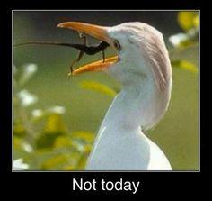 Funny animal pics! For more great humor jokes visit www.bestfunnyjokes4u.com/funny-cartoon-joke-lmao-2/