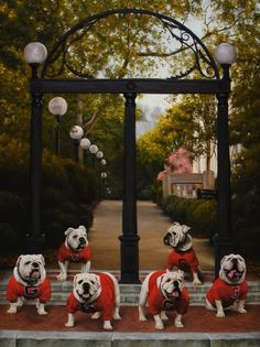UGA this is the best picture ever! Classic arches on the campus of the University of Georgia in Athens and the great Bulldog mascot Uga. Mini Bulldog, Bulldog Puppies, Bulldog Mascot, Georgia Bulldogs Football, Dog Football, College Football, Palm Harbor, Georgia Girls, Georgia Usa