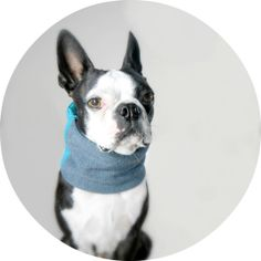 Made to order dog cowl scarf ecofriendly by PeanutLovesButter, $24.00