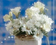 Animated White Flowers flowers fresh cut flowers arrangement bouquet animated white