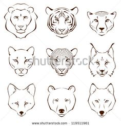 set of simple line illustrations showing different facial features of wild animals - lion, tiger, cheetah, cougar, leopard, lynx, fox, bear ...