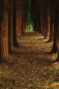 Into the woods #nature