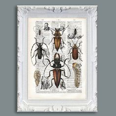 Antique insects prints Vintage french Dictionary 1922