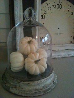 ~ white pumpkins under glass cloche~ Thanksgiving Decorations, Seasonal Decor, Halloween Decorations, Holiday Decor, Thanksgiving Games, Holiday Parties, The Bell Jar, Bell Jars, Cloche Decor