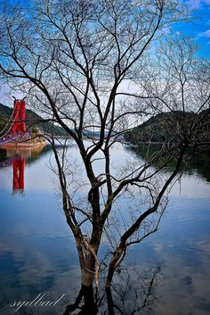 Wonderful South Korea  http://www.travelandtransitions.com/destinations/destination-advice/asia/