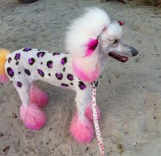 Creative Dog Grooming | Miami Florida's original pet supply boutique for holistic dog food, dog grooming, dog training, dog clothes and acce...