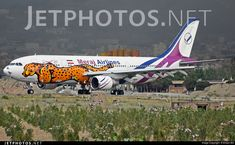 Meraj Airlines (IR) Airbus A300-622R EP-SIG aircraft, painted in ''United to conserve Asiatic Cheetah'' special colors, rolling at Iran, Tehran Mehrabad Int'l Airport. 08/05/2016. (Asiatic or Iranian Cheetah=a critically endangered  cheetah subspecies surviving only in Iran).