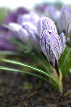Spring rain.
