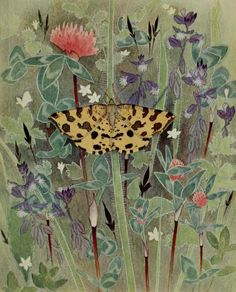La Panthere (Speckled Yellow moth) ...