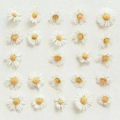 Seorah's habit of making daisy chains