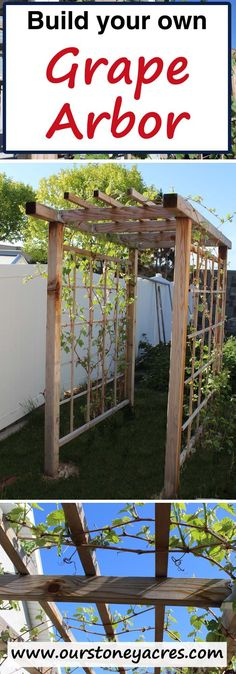 Building a Grape Arbor is a DIY project you can tackle yourself. Plan on some work, this beauty will take some time and effort but can be built in a weekend if you get started Friday night! Directions for Building a Grape Arbor Grape Vine Trellis, Grape Vines, Grape Tree, Diy Garden, Garden Projects, Night Garden, Diy Projects, Organic Gardening, Gardening Tips