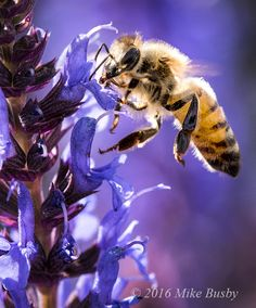 Mike's Spot - Creativity through Exploration: Bees - In Flight by Mike Busby Photography