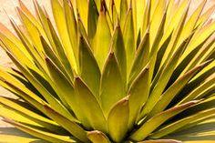 Desert Abstract Sunburst Royalty Free Stock Photo