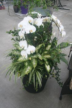 Large Indoor Orchid Planter