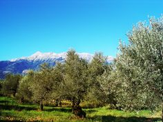View from the farm - Taygetus mountains, Sparta, Greece