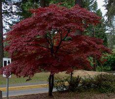 Outdoor Plants: Top 5 Trees For Small Garden | www.coolgarden.me