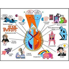 THE IMPORTANCE OF CROSSING MIDLINE: When we cross midline, it helps our brain create new neural pathways from one brain hemisphere to the other, thus increasing our overall functioning and learning experience. Brain Based Learning, Visual Learning, Motor Activities, Therapy Activities, Therapy Ideas, Speech Language Pathology, Speech And Language, Music Therapy, Speech Therapy