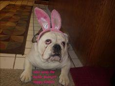 "Roscoe says ""Happy Easter!"""