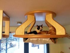 Transform your home into a paradise for cats… (image)