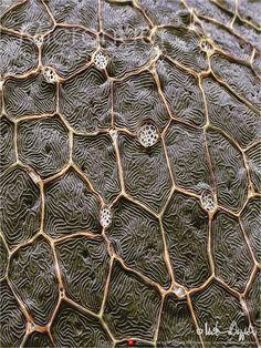 Zebrafish Skin – I › Micronaut: The fine art of microscopy by science photographer Martin Oeggerli