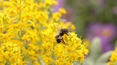 There is an environmental stain spreading across the United States and around the globe –– the result of habitual applications of systemic neonicotinoid insecticides used widely for both food production and home landscaping.