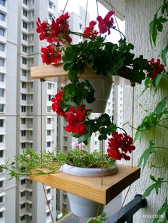 Floating Pots: A wonder and unique way to hang your favourite drooping or hanging plants in XOG's Floating Pots.   Pine wood slabs on cables with adjustable heights. Available in 1 to 4 levels and can be hung from the side off a clamp or off the ceiling.   Contact us on +91 8884555869 or xanaduorganicgardens@gmail.com to know more.