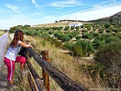 Cortijo cordobés entre los olivos. Tramo #CaminodeSantiago Mozárabe de Santiago