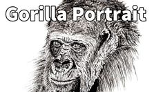 How to draw a Gorilla Portrait in Pen and Ink - Online Art Lessons