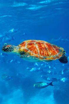 "captvinvanity: ""  Swim through the sea   Photographer   CV  """