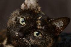 Katze sucht ein neues Zuhause
