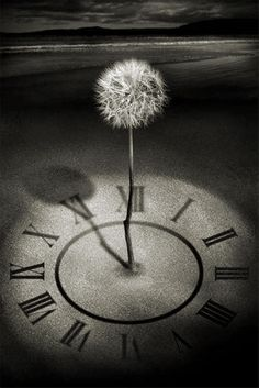 Time to Make a Wish ~