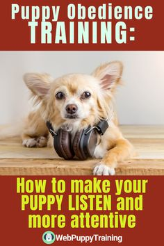 Do you have a disobedient dog that you just can't seem to manage? Learn a few  techniques by using some basic puppy obedience training. #howtomakepuppylisten #howtomakeyourpuppylisten #puppyobediencetraining Puppy Obedience Training, Puppy Training Tips, Potty Training, Training Your Dog, Online Dog Training, Puppy Barking, Dog Potty, Dog Training Techniques, Best Puppies