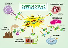 Free radicals attack us from all sides! Fight back with antioxidants form fresh fruits and veggies and plenty of supplements. lifepilllaboratories.com #TheLifePill  #Antioxidants #FightFreeRadicals #Benefits #FightingPower