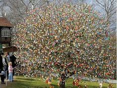 Easter tree in Germany. Around when he was just a young boy, Volker Kraft saw his very first Easter Tree (Eierbaum, Osterbaum or Ostereirbaum, in German). Although his children are now grown, they help him continue the tradition he dreamed of as a boy. Hoppy Easter, Easter Bunny, Easter Eggs, Egg Tree, Easter Tree, Thinking Day, Easter Celebration, Photo Tree, Egg Decorating