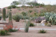 Desert Landscaping Ideas Picture