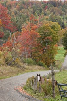 Country road & a curious horse checking things out :) so adorable!                                                                                                                                                      More