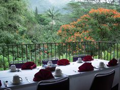 Treetops Restaurant in Oahu. You walk across a rustic bridge in the trees to get here.