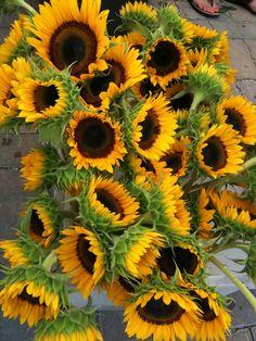 Sunflowers, brighten up the day, always :)