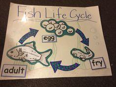 Fish Life Cycle