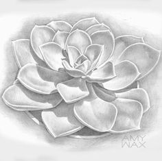 A pencil #drawing I just finished of a succulent I photographed while on vacation in San Francisco. I love drawing and right now pencil is my favorite medium although I also love #pastels and oils. I hope you like it!