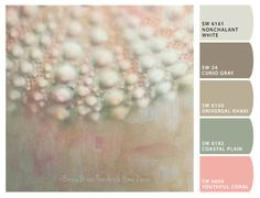 Pastel Sea Urchin Shell Canvas Giclée Wrap shabby chic macro photography, spring home decor, beach cottage art, pink mint green peach on Etsy, $98.00