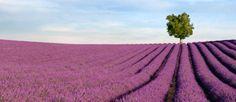 Provence - http://www.rantapallo.fi/ranska/provence/