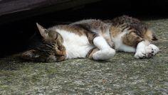 お昼寝最中にゃ~の猫(A-012)猫写真-横浜