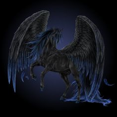 Black Pegasus | Black Pegasus by Howrseprofile 4 Jens tatt