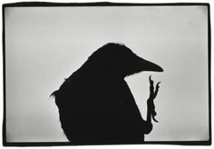 Japanese photographer Masahisa Fukase is exhibited for the first time in United Kingdom. The Michael Hoppen Gallery inaugures today Solitude of Ravens with vintage prints from Fukase. Japanese Photography, Vintage Photography, Black And White Frames, Black White, Rabe, Famous Photographers, Monochrom, Paris Photos, Solitude