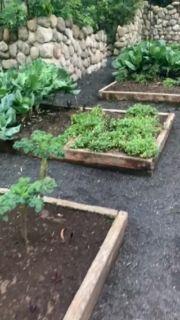 Suitcase, Africa, Platform, Garden, Recipes, Garten, Lawn And Garden, Recipies, Gardens
