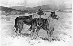 Collies from the Herdwick Collie Kennels late 1800s.