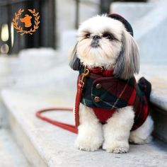 Marshmallowpup09 AKA Marshall is wearing a Canine Styles Red Cashmere Dog Sweater,  Hooded Toggle Dog Coat in Red Plaid, And Braided Leather Classic Dog Lead in red!