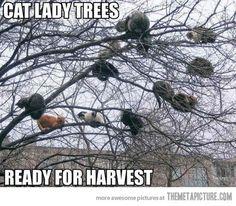 Cat lady tree… So many cats!!! ♥