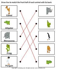 math worksheet : wild animals printable for poster or game cards  animals  : Wild Animals Worksheets For Kindergarten